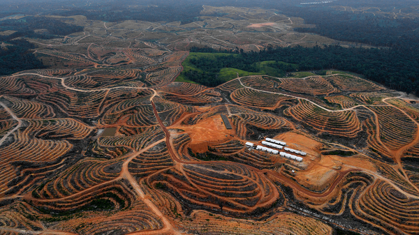 Deforested land on Indonesia
